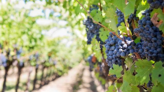 Vignoble en Terres-de-Meuse