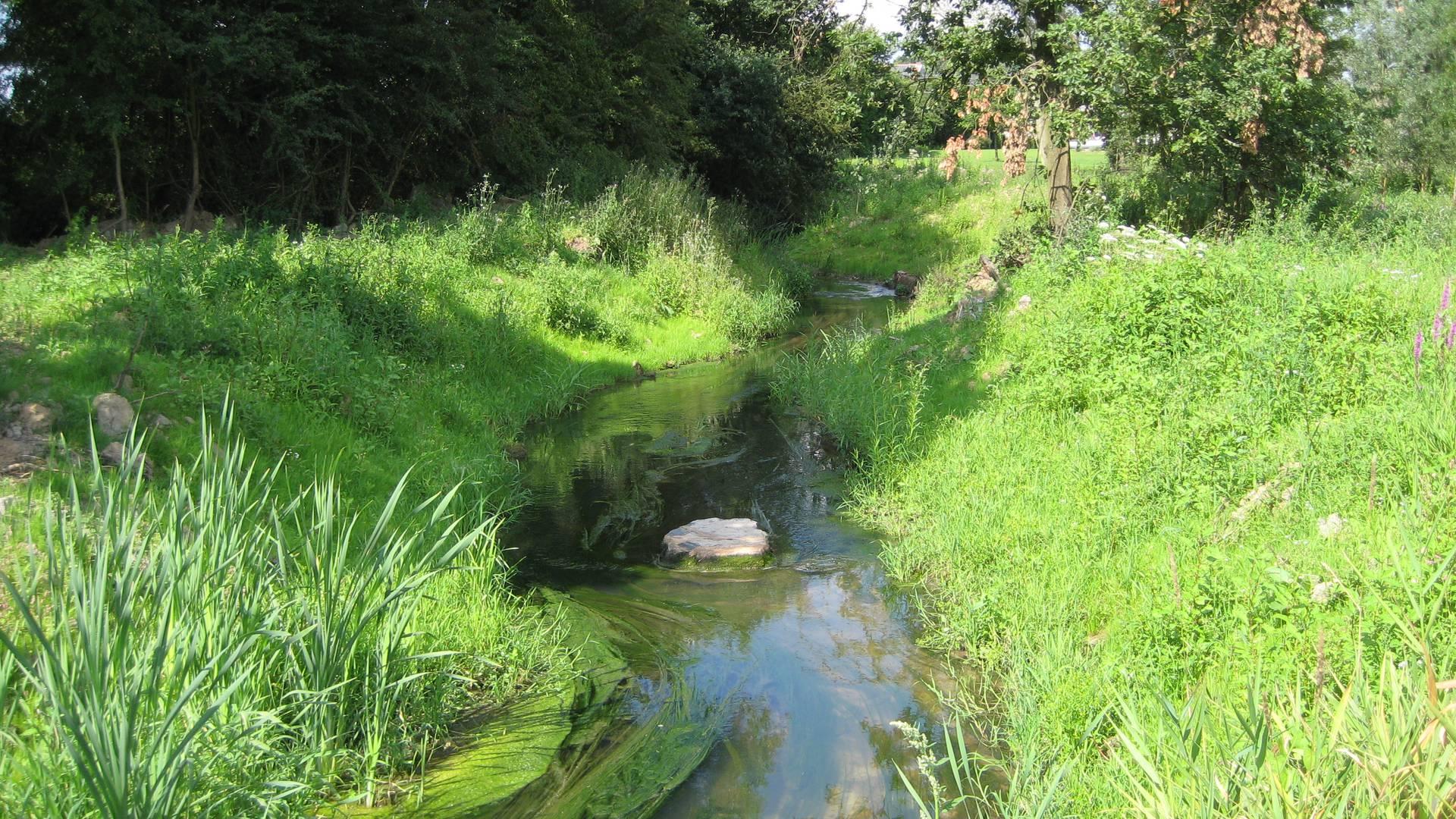 Ruisseau le Geer - copyright Juline Mols