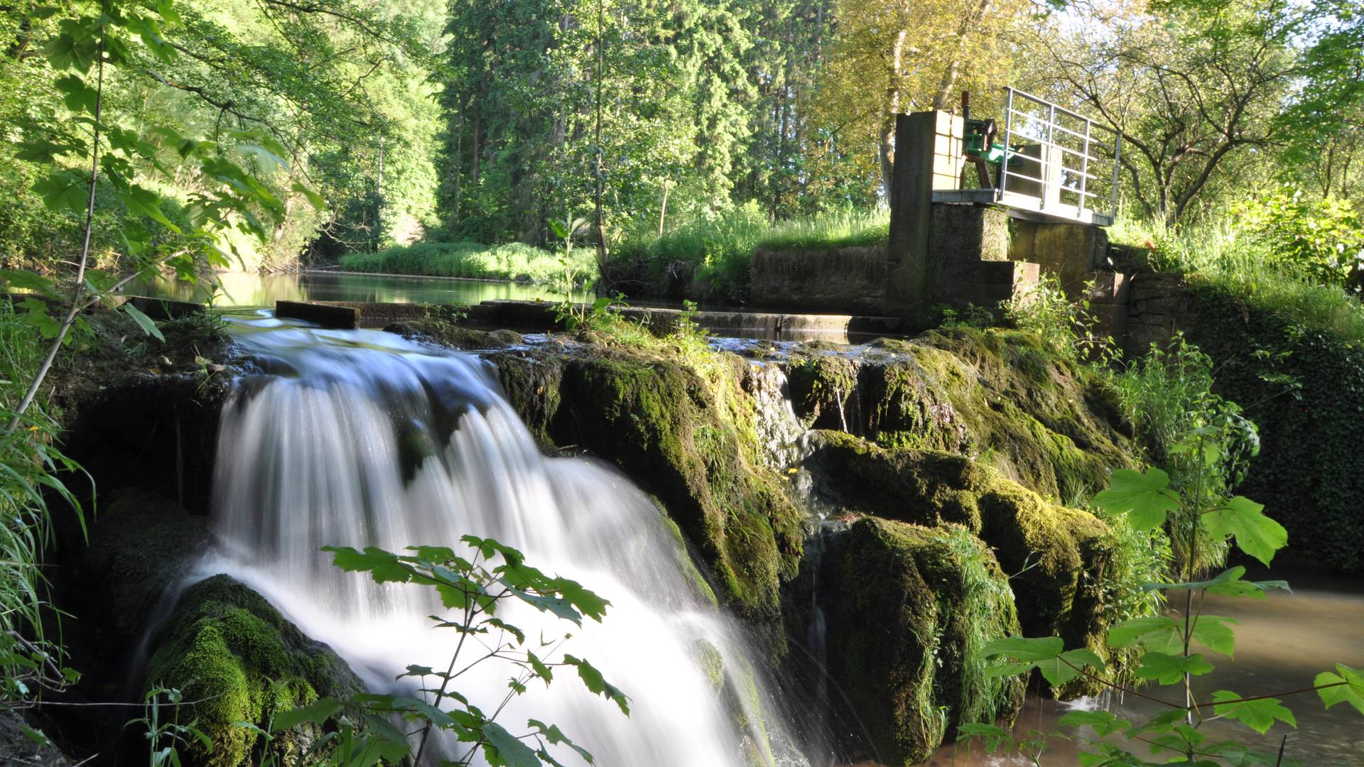 Ruisseau le Hoyoux - copyright S. Pêcheur
